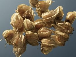 Come mangiare Physalis